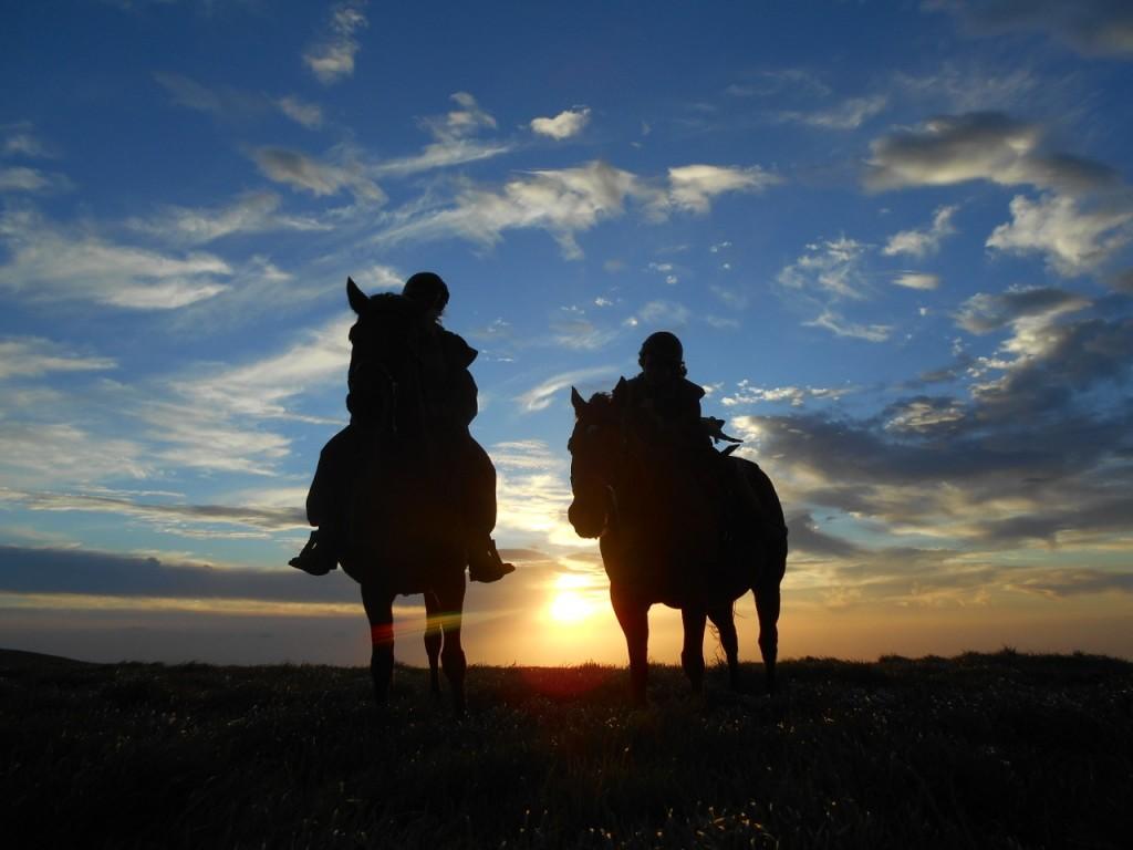 sunsethorses